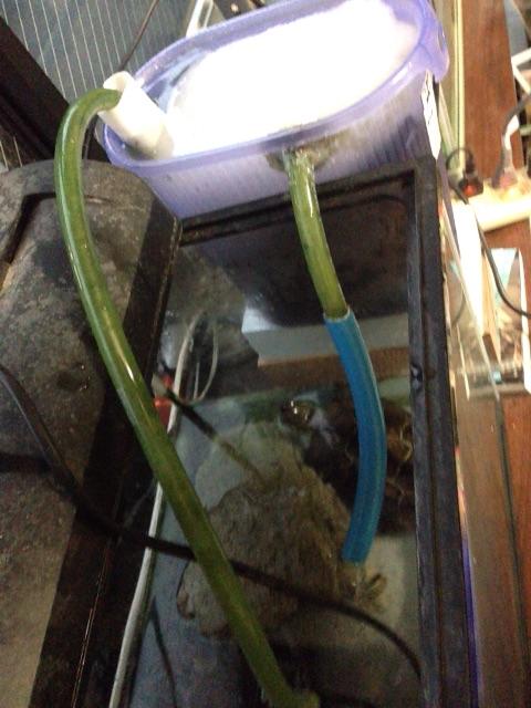 亀の水槽 自作した外部濾過器