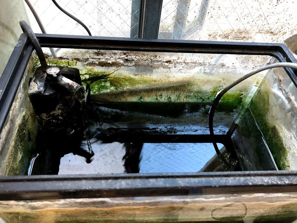 Aquaterrarium01